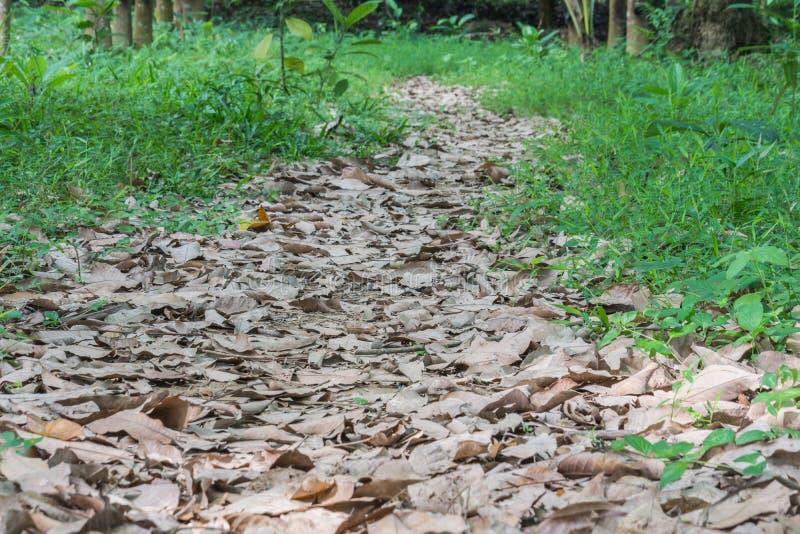 Красивый лес осени падения стоковое изображение
