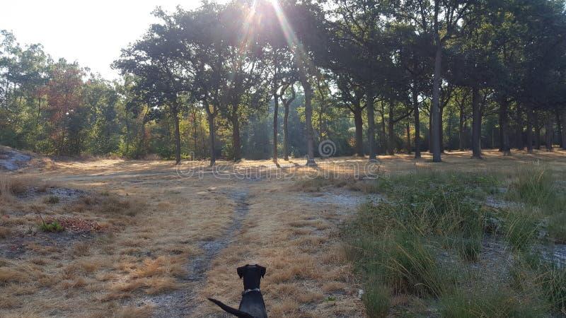 Красивый лес с светить солнца и авантюрная собакой стоковая фотография