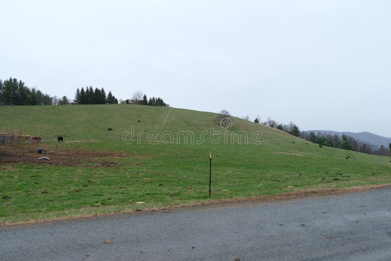 Красивый луг ландшафта взгляда холма с голубым небом стоковое изображение rf