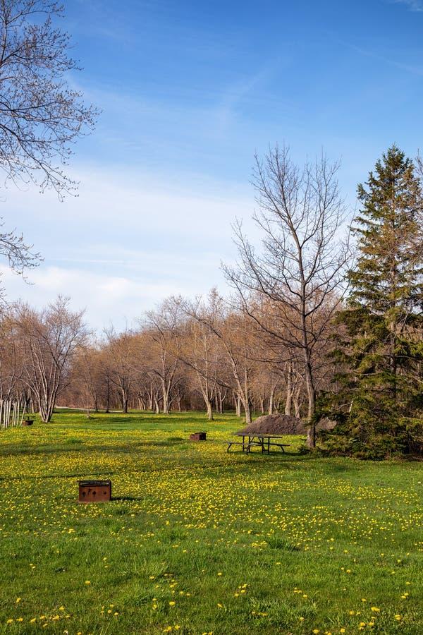 Красивый луг с wildflowers весной стоковое фото rf