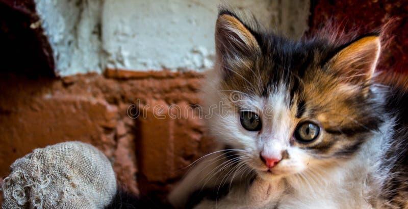 Красивый маленький котенок около стены стоковое изображение rf