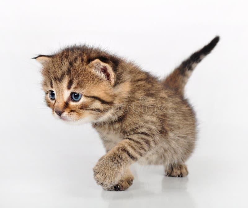 Красивый милый идти котенка стоковая фотография