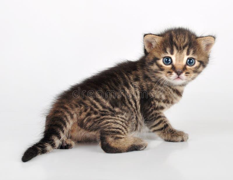 Красивый милый котенок смотря назад стоковое фото rf