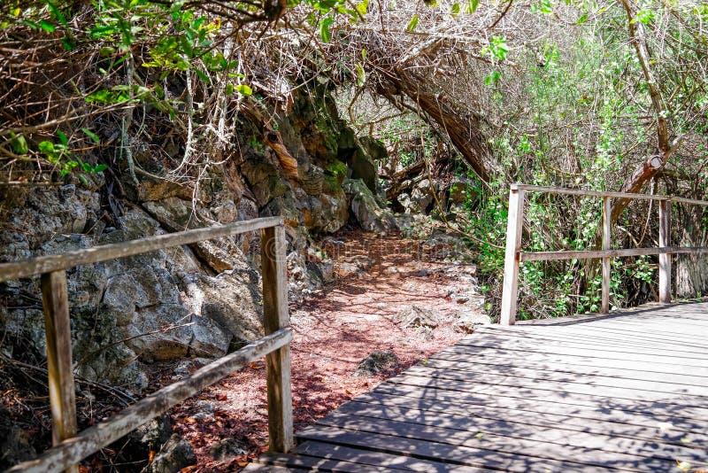 Красивый на открытом воздухе взгляд деревянного пути близко к мангрове на острове San Cristobal, островах Галапагос стоковая фотография