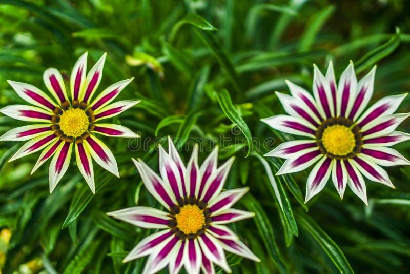 Красивый образец в куполе цветка на садах заливом, Сингапуре стоковые изображения