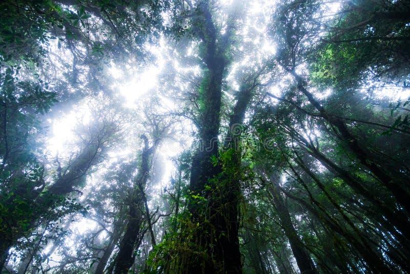 Красивый дождевой лес на следе природы ka ang в парке нации inthanon doi, Таиланде стоковое фото rf