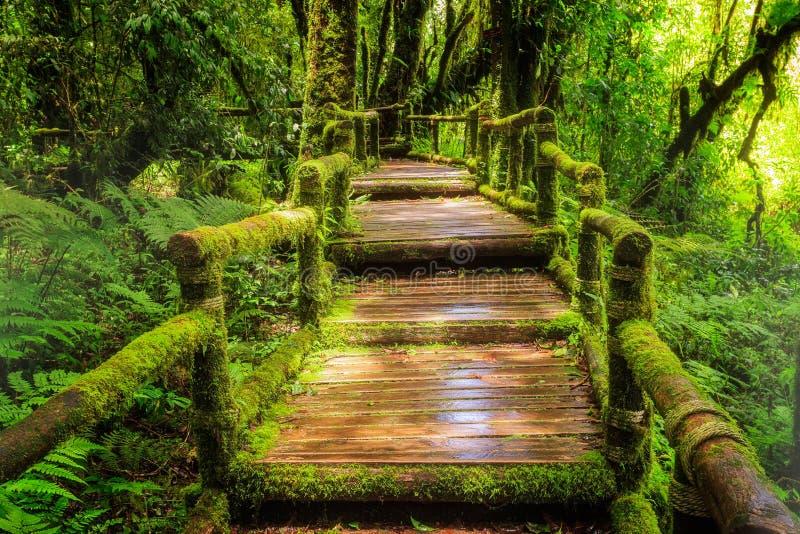 Красивый дождевой лес на следе природы ka ang стоковые изображения rf