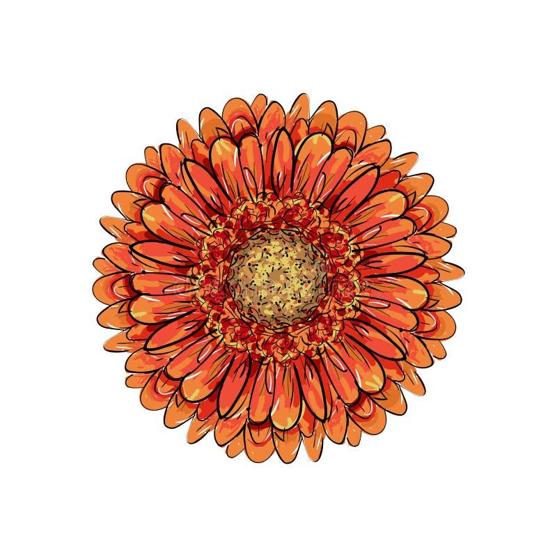 Красивый оранжевый gerbera изолированный на белой предпосылке для поздравительных открыток, приглашения свадьбы, день рождения, д бесплатная иллюстрация