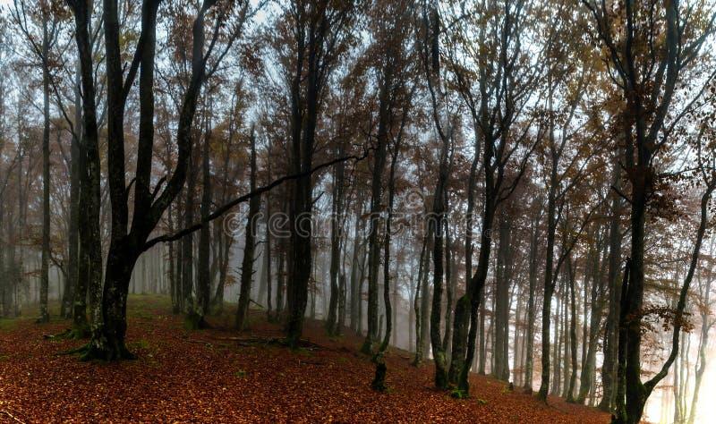 Красивый осенний лес с туманом, мхом и листьями красного цвета стоковые изображения rf