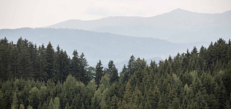 Красивый панорамный coniferous лес стоковые фото