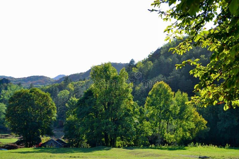 Красивый парк для идти Зеленая лужайка, деревья и голубое небо Черногория стоковое фото