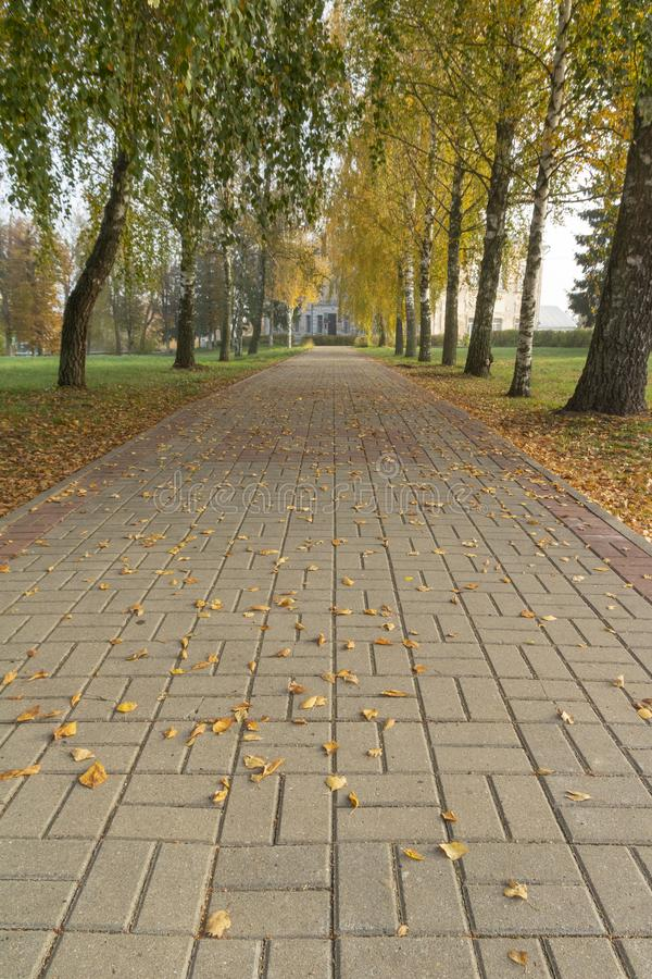 Красивый парк осени с красочными деревьями и листьями стоковое изображение rf