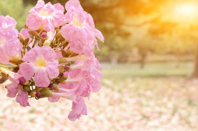 Красивый парк света утра публично стоковое изображение