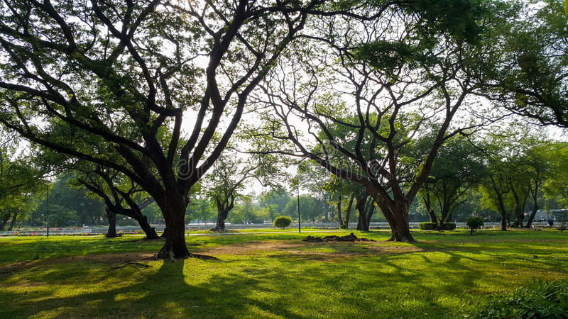 Красивый парк света утра публично с полем зеленой травы и зеленым свежим заводом дерева стоковое изображение