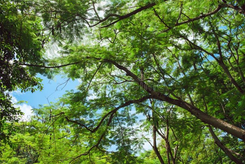 Красивый парк сцены парка публично с полем зеленой травы, зеленым заводом дерева и небом партии пасмурным голубым стоковое изображение rf