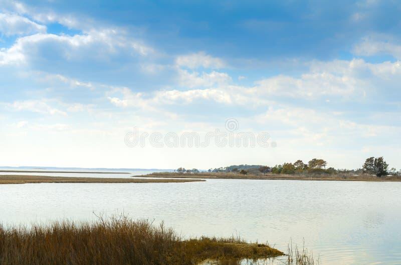Красивый пейзаж болота Seashore острова Assateague национального стоковые фотографии rf