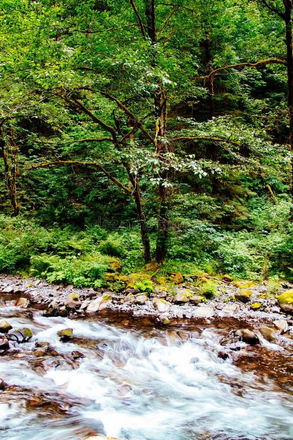 Красивый пейзаж леса стоковое изображение rf