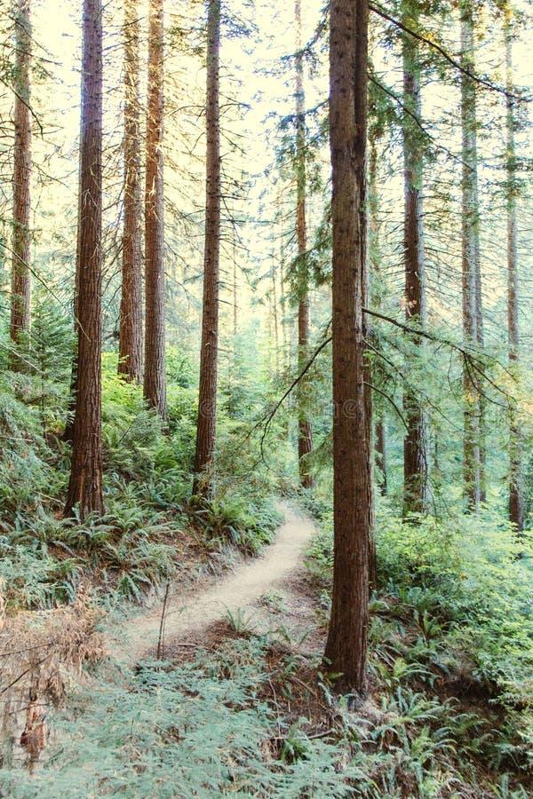 Красивый пейзаж леса стоковые изображения rf