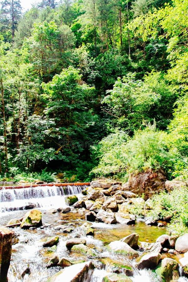 Красивый пейзаж леса стоковая фотография