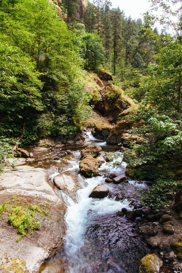 Красивый пейзаж леса стоковое фото rf