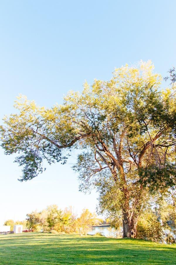 Красивый пейзаж леса стоковое изображение