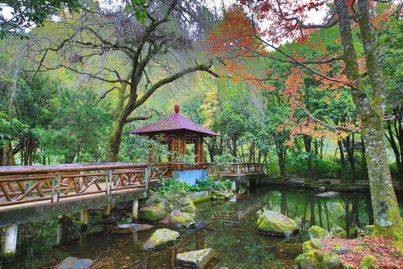 Красивый пейзаж озера с деревьями павильона и клена стоковая фотография
