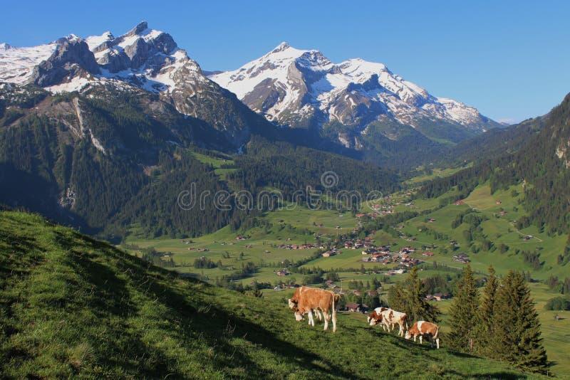 Красивый пейзаж около Gstaad стоковая фотография