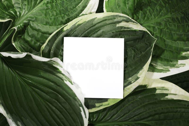 Красивый план сделанный тропических зеленых листьев и пустой карты белой бумаги для космоса экземпляра Минимальная естественная п стоковое изображение rf
