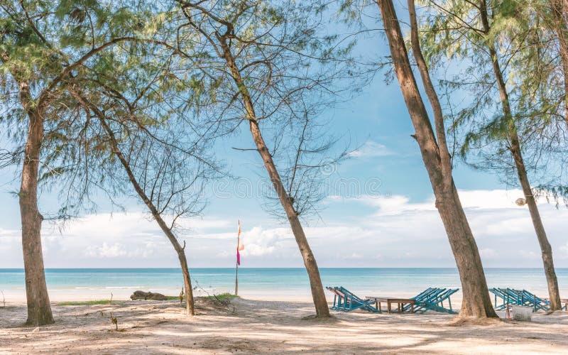 Красивый пляж взморья с tre deckchair или liegestuh и сосны стоковая фотография
