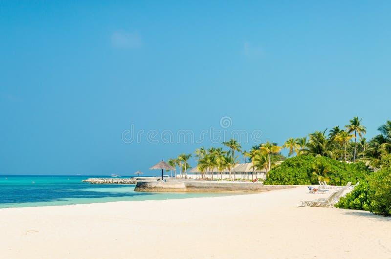 Красивый пляж рая с высокорослыми пальмами и голубым небом стоковые фото