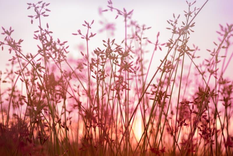Красивый полевой цветок в заходе солнца стоковые фото