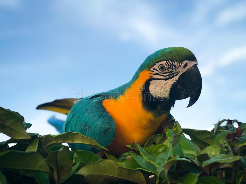 Красивый попугай ар на ветви дерева стоковые фото