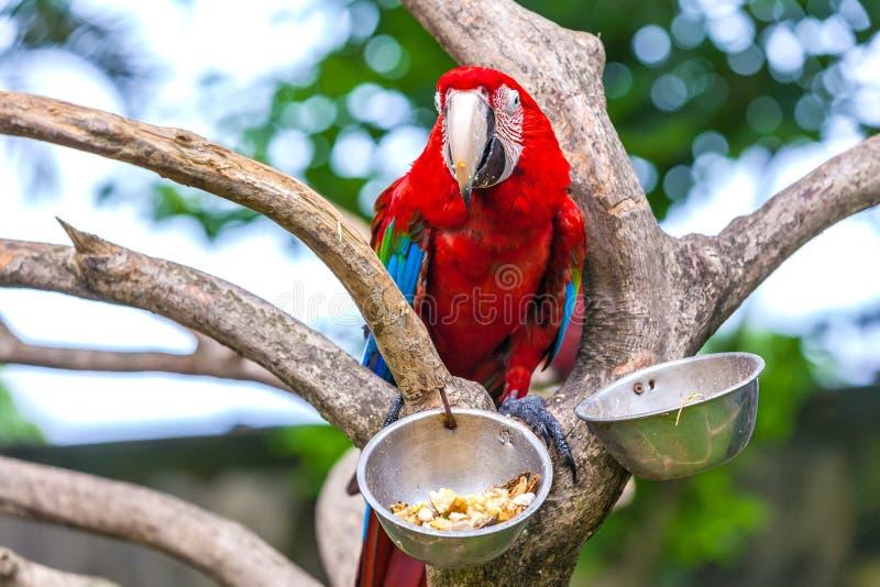 Красивый попугай в тропическом зоопарке Ubud, Бали, Индонезии стоковое изображение