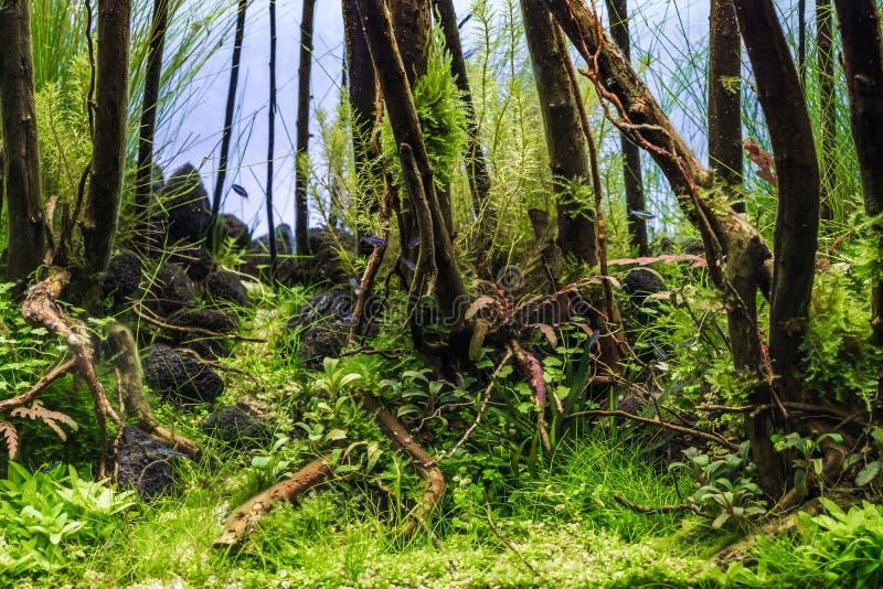 Красивый пресноводный тропический зеленый засаженный аквариум с тропическими рыбами Засаженный аквариум с неоновыми tetra рыбами стоковое фото