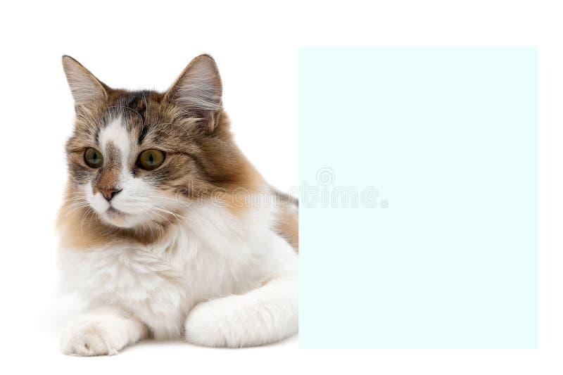 Красивый пушистый кот лежит о знамени стоковое фото