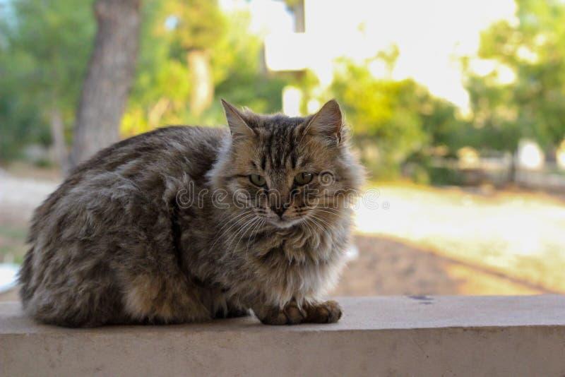 Красивый пушистый кот на стене, Лимасол, Кипр стоковые фото