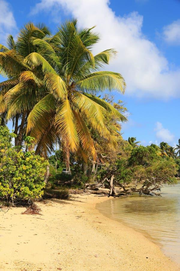 Красивый пляж в острове Marie Galante, Гваделупе, карибских островах стоковая фотография rf