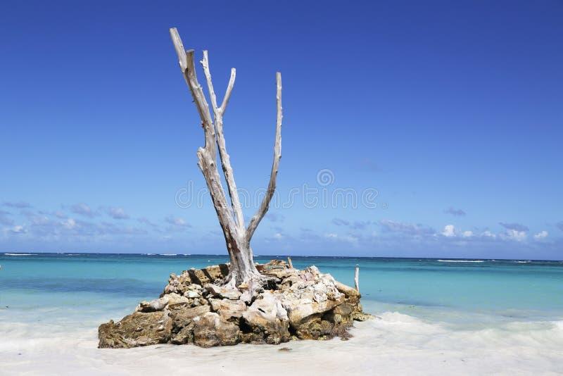 Красивый пляж Bavaro в Punta Cana, Доминиканской Республике стоковые фотографии rf