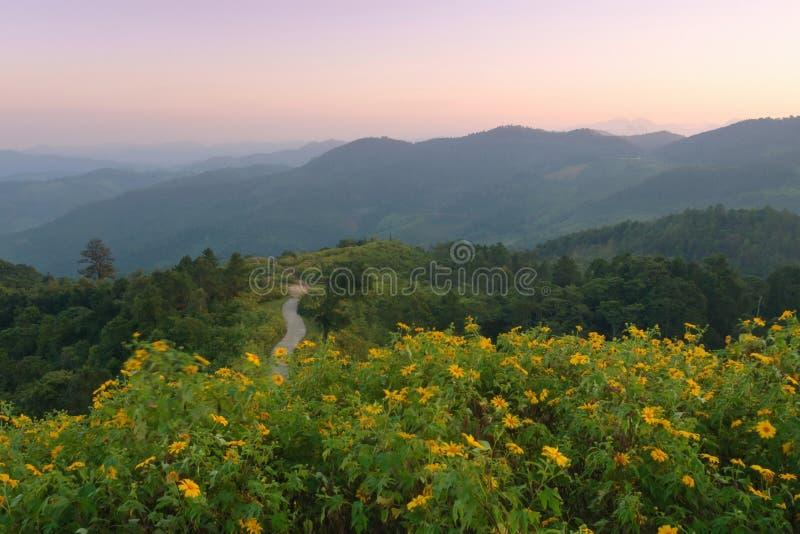 Красивый рассветать в мексиканском солнцецвете или diversifolia Tithonia стоковое изображение rf