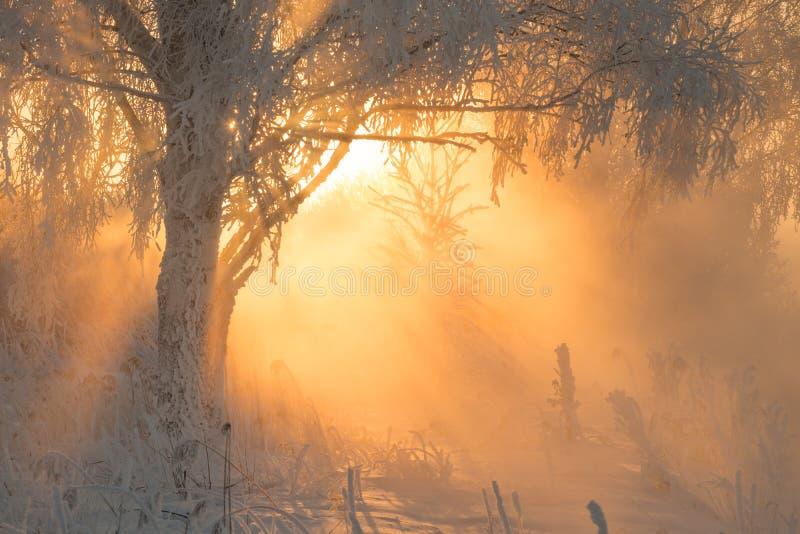 Красивый рассвет утра в лесе зимы с изумляя лучами солнца стоковые изображения