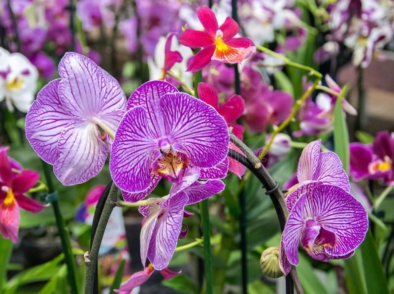 Красивый розовый цветок орхидеи с зеленой флористической предпосылкой стоковое фото
