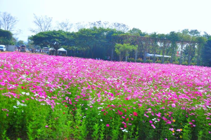 Красивый розовый цветочный сад на ферме Джима Томпсона, Таиланде стоковое фото rf
