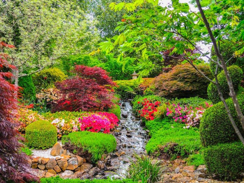 Красивый сад в весеннем сезоне в японском стиле стоковое изображение