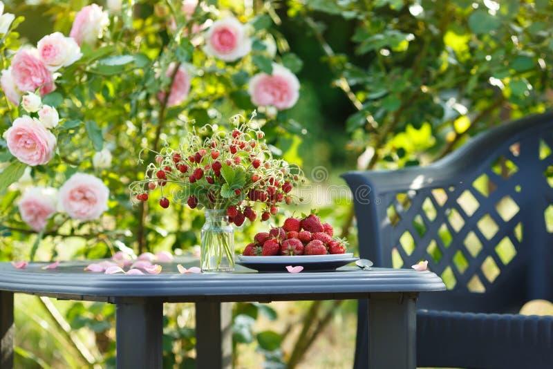 Красивый сад с зацветая розами, вкусными дикими клубниками и стулом стоковое фото