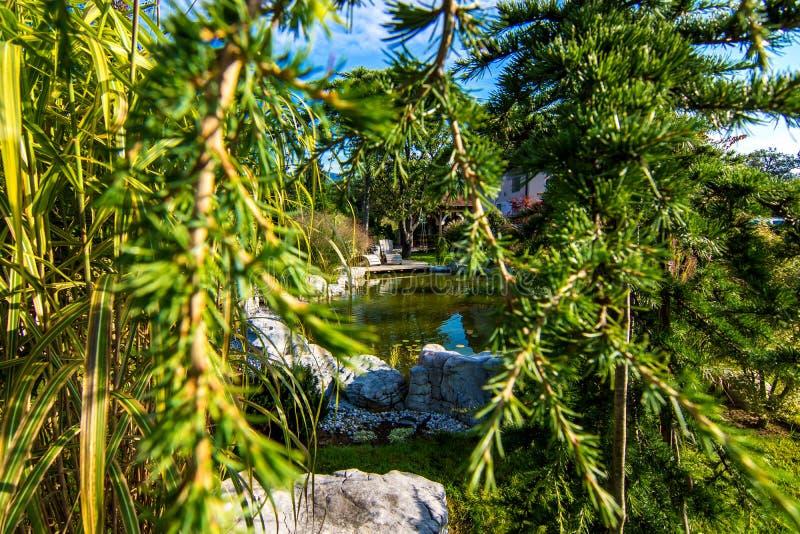 Красивый сад с прудом стоковые изображения rf