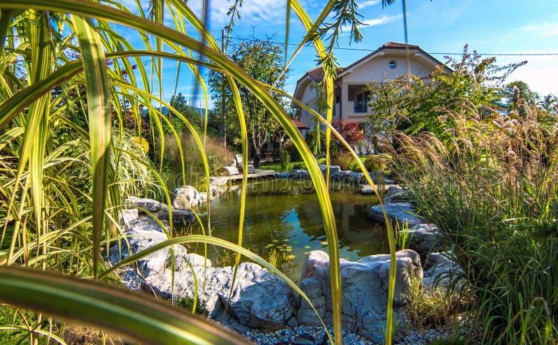 Красивый сад с прудом стоковая фотография rf
