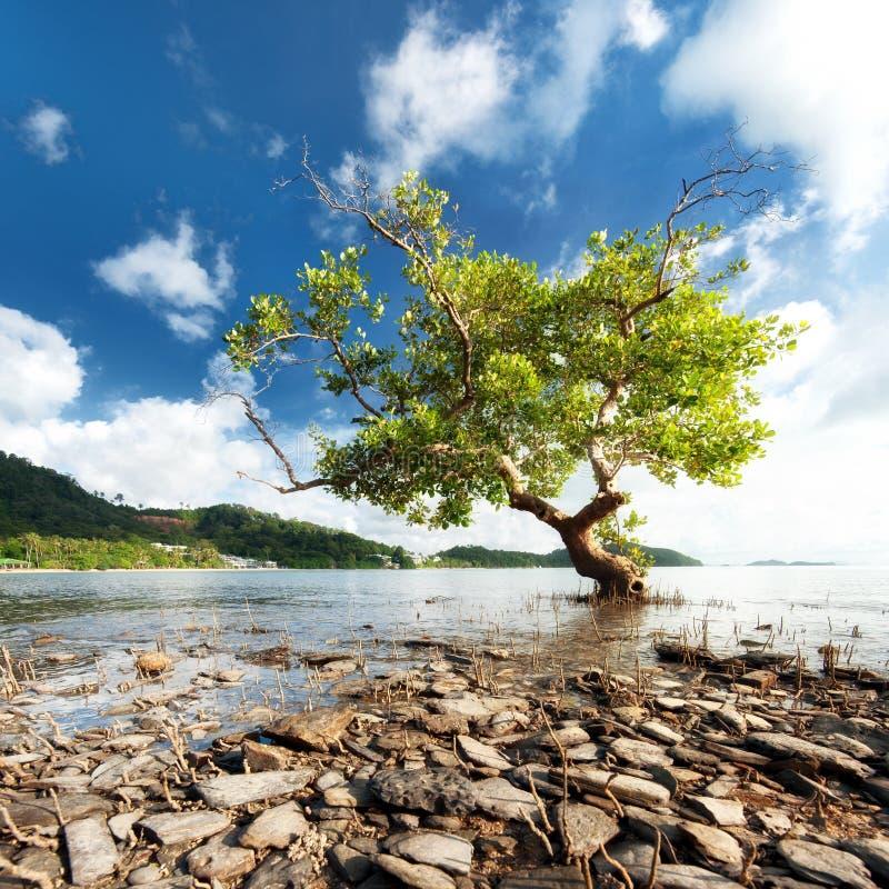 Красивый силуэт дерева стоковые изображения rf