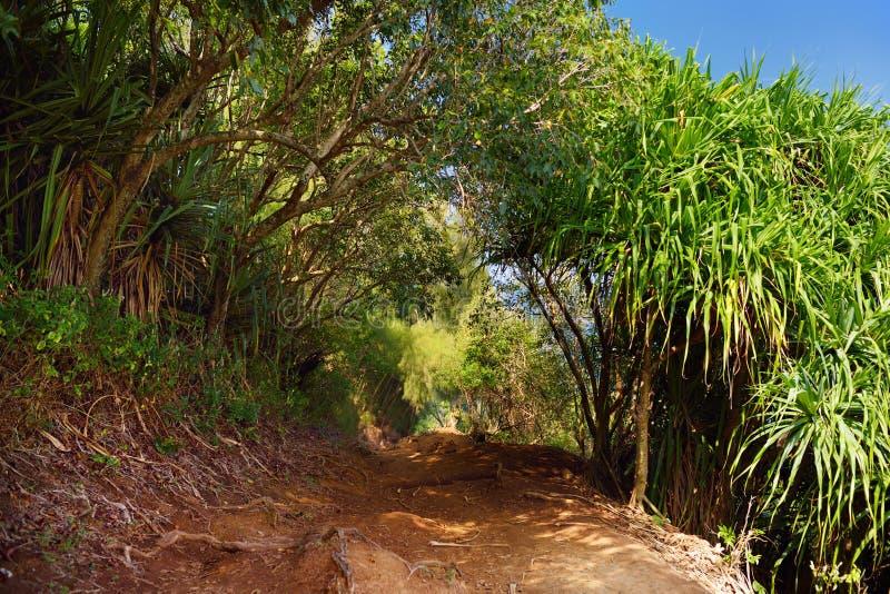 Красивый след петли Pololu расположенный около Kapaau, Гаваи, которые отличают красивыми полевыми цветками и сногсшибательными вз стоковая фотография
