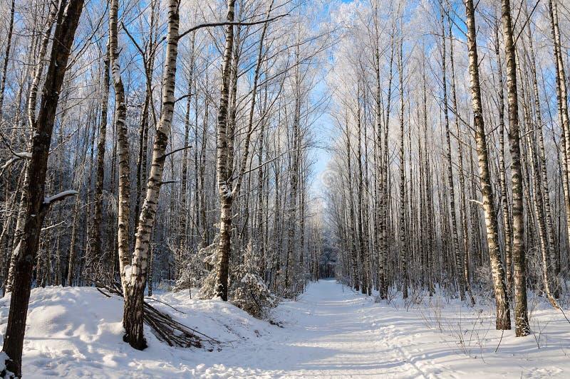 Красивый снежный ландшафт зимы стоковые изображения