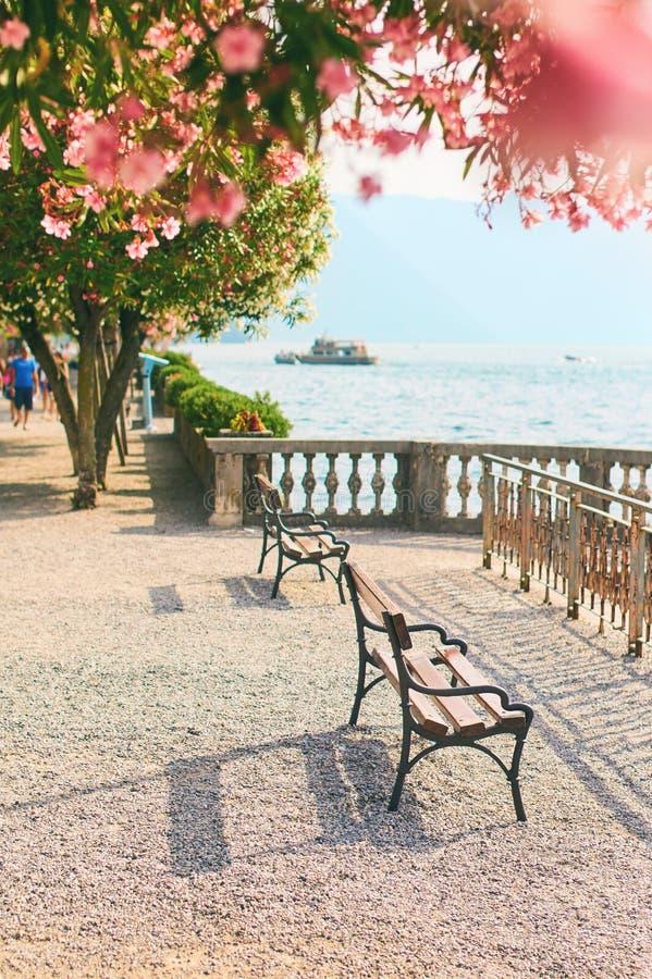Красивый солнечный взгляд лета городка Bellagio на озере Como в Италии с зацветая олеандром nerium цветет, корабли и стоковое фото rf